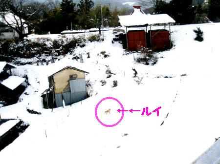 2008年01月21日_P1210029