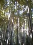 竹の庭は有料