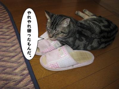 IMG_1215_1.jpg