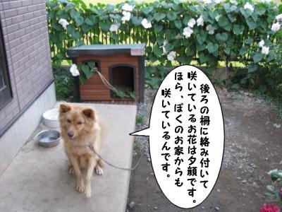 IMG_1275_1.jpg