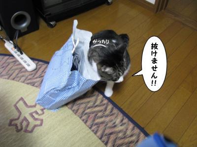 IMG_1324_1.jpg