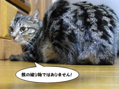 IMG_1379_1.jpg