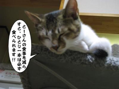 IMG_1729_1.jpg