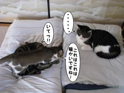 IMG_2214_1.jpg