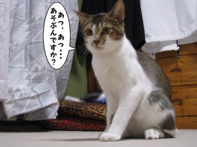 IMG_2682_1.jpg