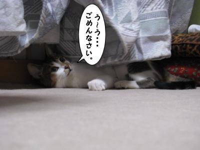IMG_2687_1.jpg