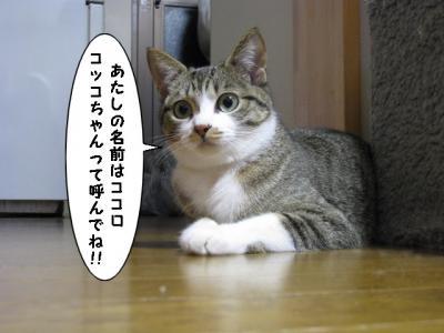 IMG_3822_1.jpg
