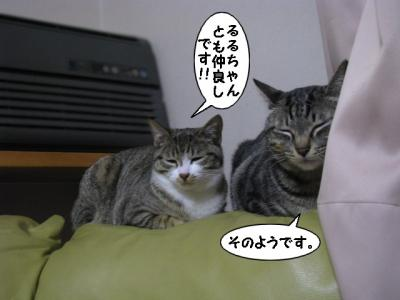 IMG_4286_1.jpg