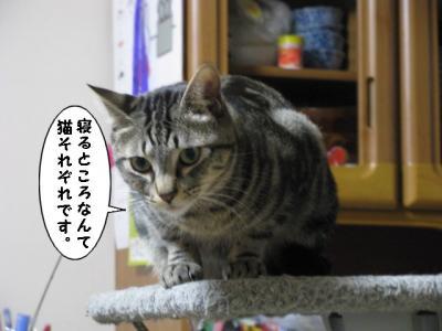 IMG_4410_1.jpg