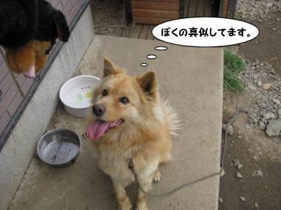 IMG_4885_1.jpg