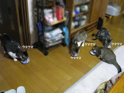 IMG_6012_1.jpg