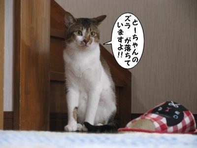 IMG_6481_1.jpg