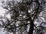 松の枝ぶり