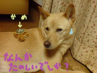 20080912220113.jpg