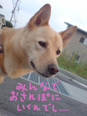 20080914163540-1.jpg
