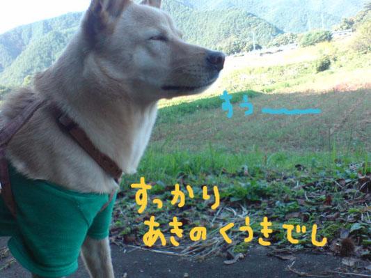 20081013144159.jpg