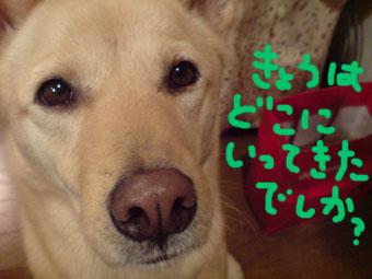 20081017195906.jpg