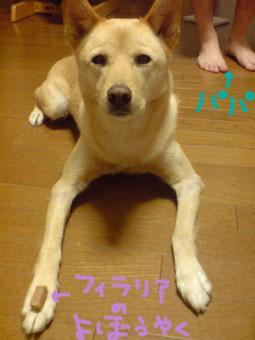 20081018080002.jpg