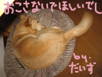 IMG_1334.jpg