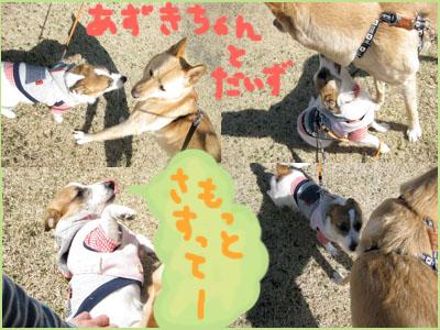 daizutoazuki.jpg