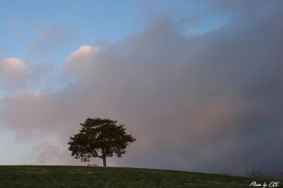 09.1.5 一本の樹