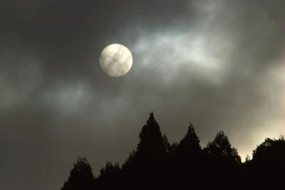 09.1.5 太陽と杉