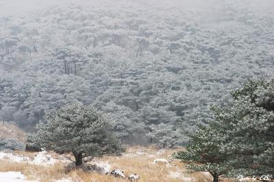 えびの高原雪景色