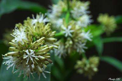 幸福の樹,開花Ⅱ
