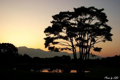 シルエットの樹