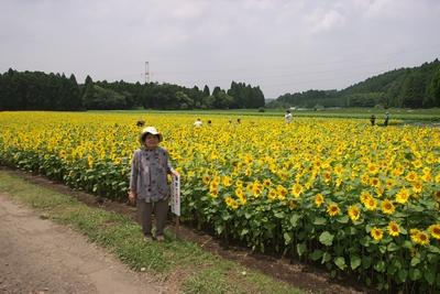 庄内の向日葵と母