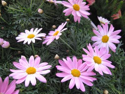 IMG_0999a_convert_20090129170429.jpg