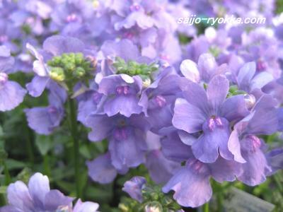 IMG_1211a_convert_20090210170439.jpg