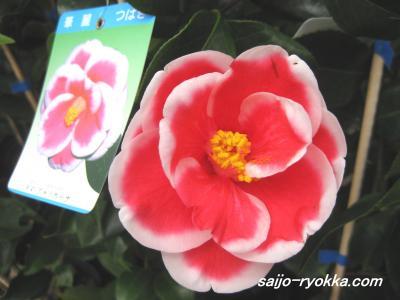 IMG_1359a_convert_20090226175423.jpg