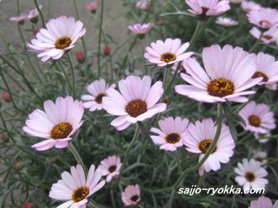 IMG_1409a_convert_20090228171803.jpg