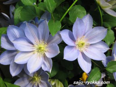 IMG_1665_convert_20090327184741.jpg