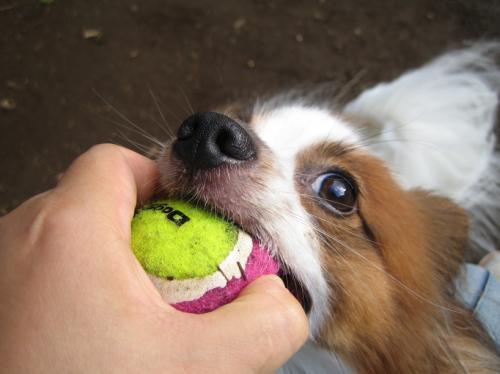 ボール命!