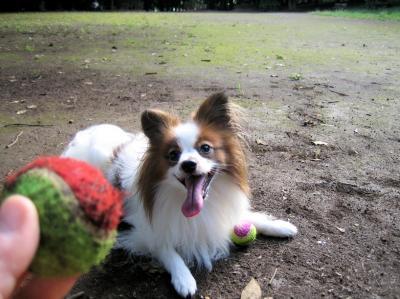 ボール?!