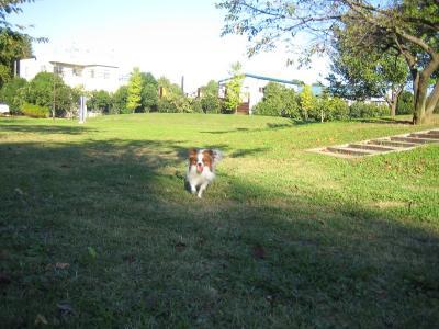 芝生でボール1