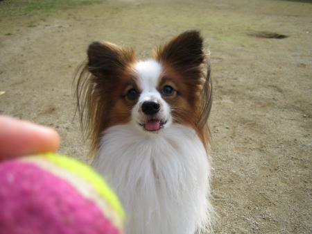 ボール好き1