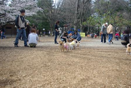 4・4 ドッグラン1