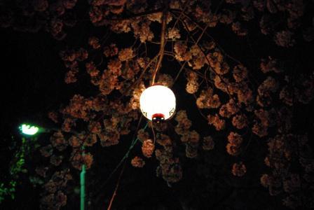 4・8 夜桜1