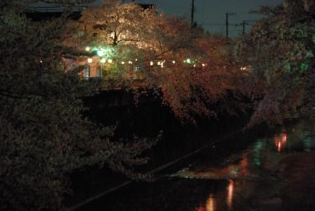 4・8 夜桜2