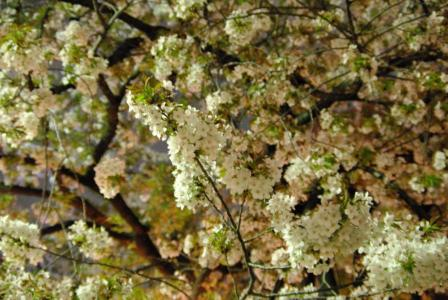 4・8 夜桜3
