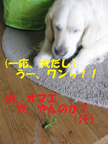 20090713003.jpg