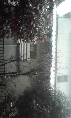 雪♪+。*