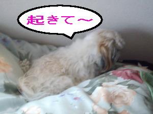 okiteyo1.jpg