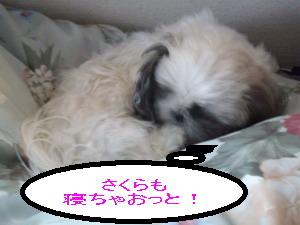 okiteyo2.jpg