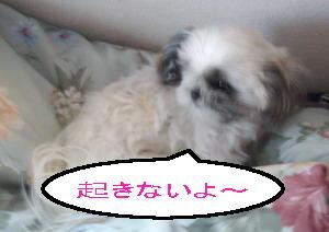 okiteyo4.jpg