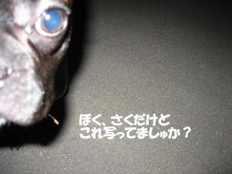 20060605221202.jpg