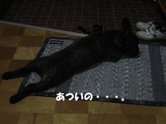 20060810211211.jpg